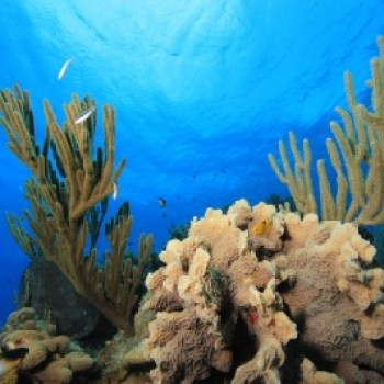 キューバの水中写真