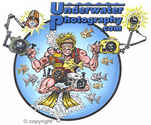 UnderwaterPhotography.com - forums, online u/w photo contest, underwater photo courses, and much, much more...