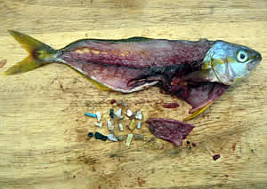 Image result for plastic in the ocean