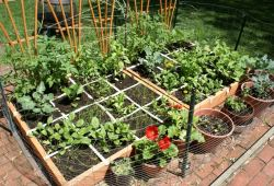 Instructions On How To Start A Small Vegetable Garden