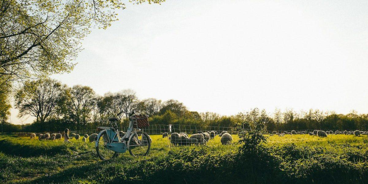 Dervla Murphy is known for biking from Ireland to India   © Kira Laktionov/Unsplash