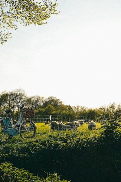 Dervla Murphy is known for biking from Ireland to India | © Kira Laktionov/Unsplash