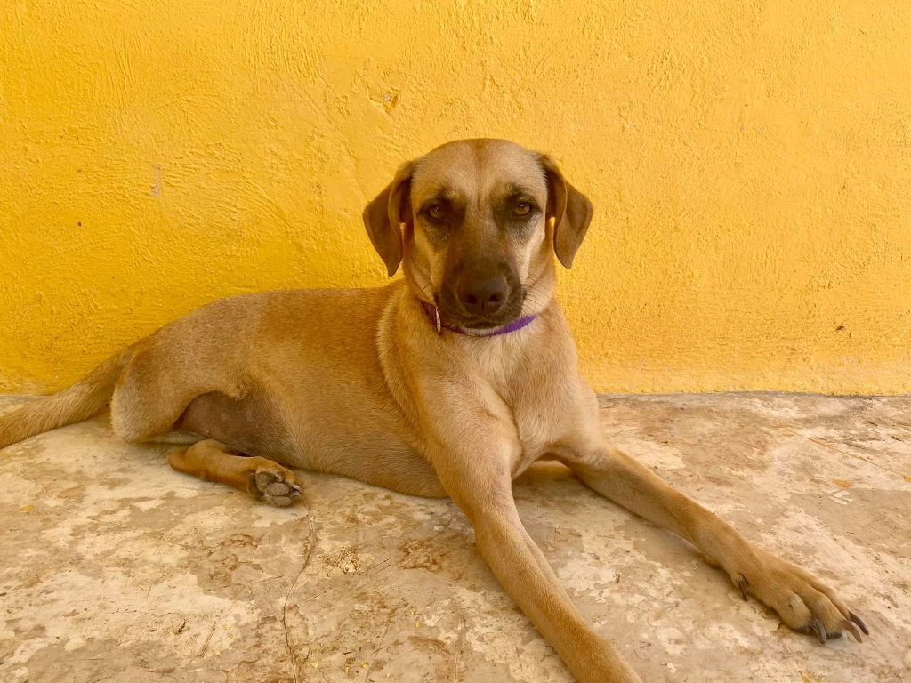 Refugio Animal Holbox works to re-home and re-habilitate Mexico's stray dogs and cats | © Nikki Vargas