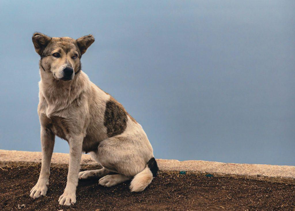 A stray dog in Albania   © Moka/Unsplash
