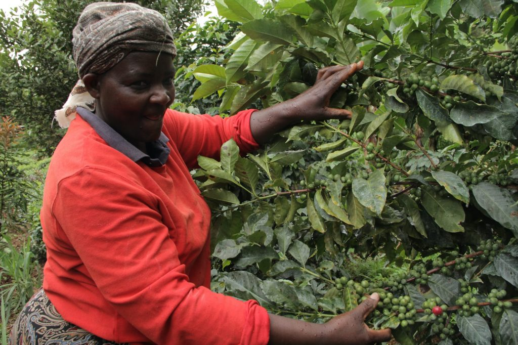 A female coffee farmer in Kenya | © James Karuga/Shutterstock