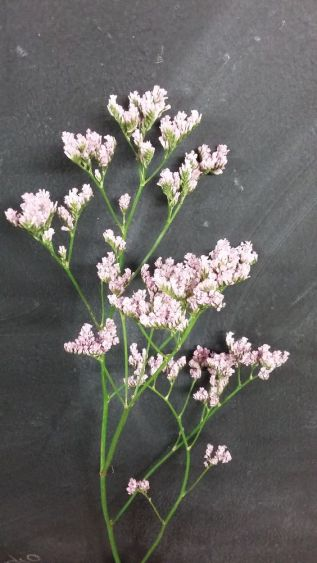 deco-plantes-sechees-02
