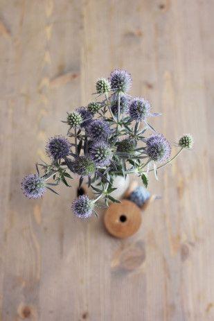 id e d co 10 id es de plantes s ch es pour une touche de nature une hirondelle dans les tiroirs. Black Bedroom Furniture Sets. Home Design Ideas