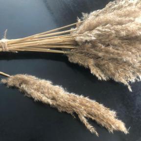 acheter herbe de la pampa (3)