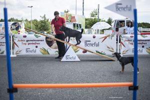 Pause für den Hund auf Reisen. Foto: Mobil in Deutschland e. V.