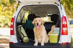 Großes Gefahrenpotenzial für Mensch und Tier beim ungesicherten Transport des Hundes. Foto: A.T.U.