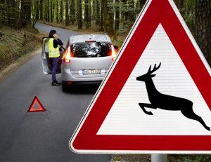 Wer durch Waldstücke fährt, muss Geschwindigkeit anpassen und vorsichtig fahren. Wildunfälle sind keine Seltenheit: Cirka 240.000 Autofahrer müssen ihr Auto deshalb pro Jahr in die Werkstatt bringen. Mit dem richtigen Verhalten lässt sich mancher Unfall vermeiden. Foto::HUK-Coburg / Olaf Tiedje.