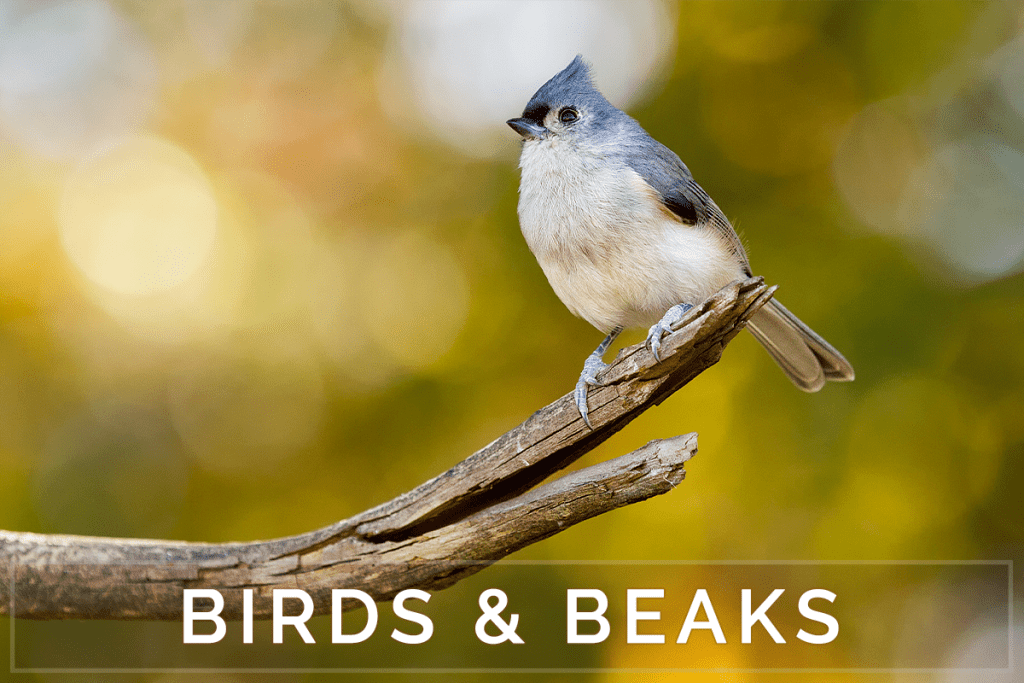Birds, Feathers and Beaks - Birding Photography