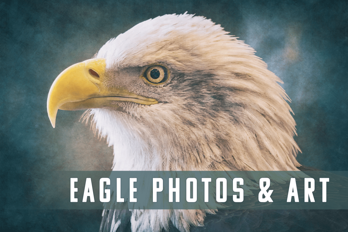 Eagle Photography and Art