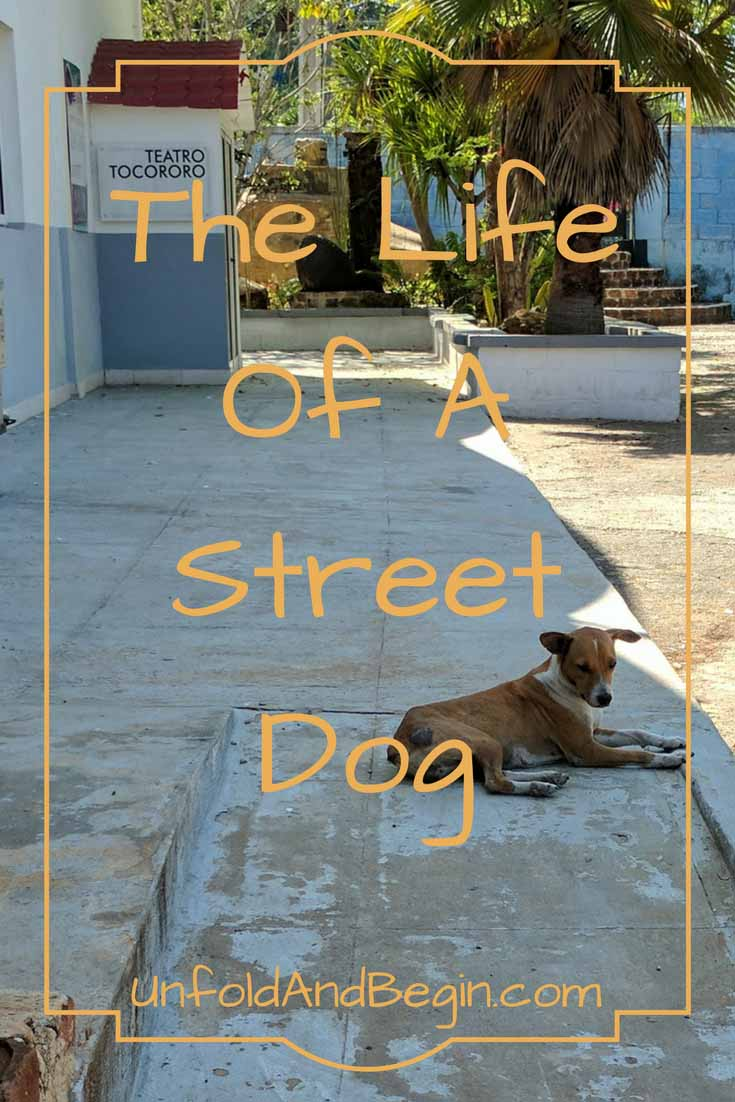 There are books about stray dogs and any number of books that talk about the life of a street dog.  A new creativity prompt on UnfoldAndBegin.com