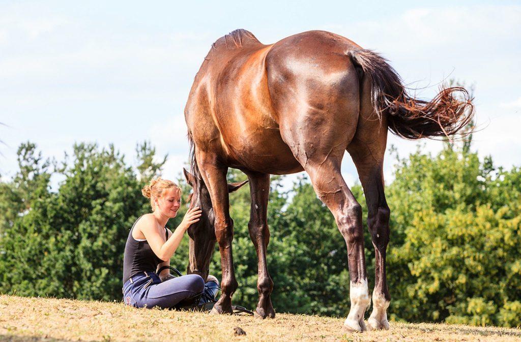 Meditating with Horses on UnfoldAndBegin.com