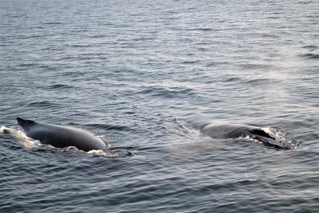 2 humpbacks on UnfoldAndBegin.com