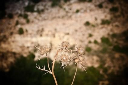 fotoperiodismo_documental_libano_011