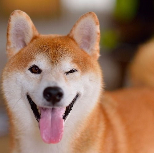 Customary Dog Tax. ;)