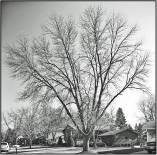 November 9: Our place in Bloomington, Minn.. The stark look of trees without leaves makes for a bit of melancholy, knowing what's to come next. Perhaps that winter rental in Key West, Fla., isn't such a bad idea after all?