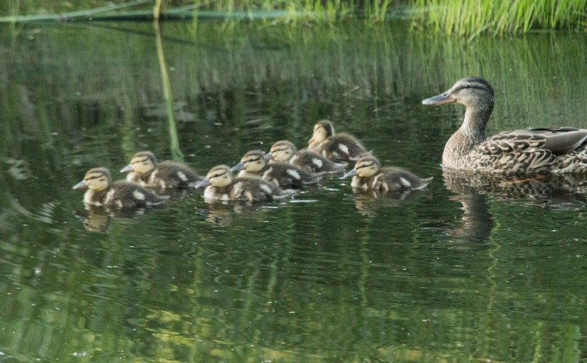 MICHAEL BOGERT: Photo Gallery — Just Ducky