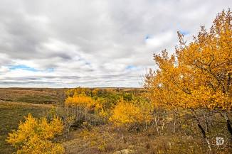 October 16: Western North Dakota north of Carson.