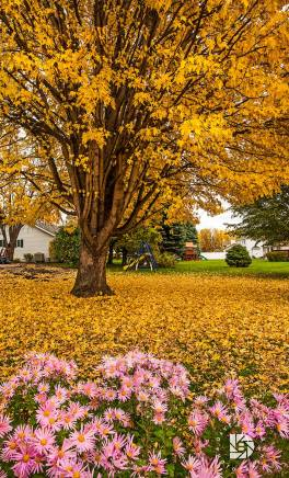 """October 19: """"Backyard Fall Color Beauty."""" Beautiful backyard photos of our neighborhood in Grand Forks."""
