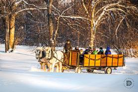 An old-fashioned team of horses hauling people around in a cart in the snow at Lincoln Park.