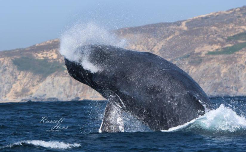 RUSS HONS: Photo Gallery — Cabo San Lucas