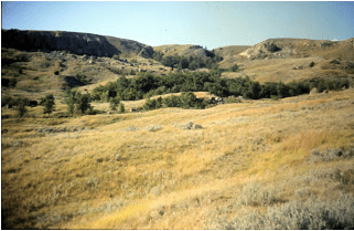 LILLIAN CROOK: WildDakotaWoman — Musings On Petrichor