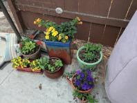 I got the patio pots done.