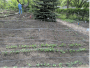 My husband surveying the vegetable garden. So far, he's winning the battle with the rabbits.