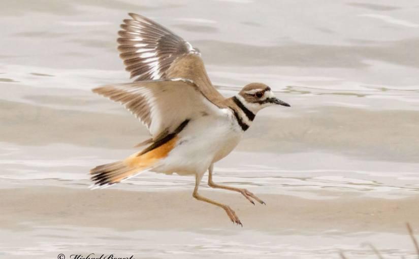 MICHAEL BOGERT: Photo Gallery — Birds Of A Feather