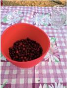 Manna from heaven — juneberries.