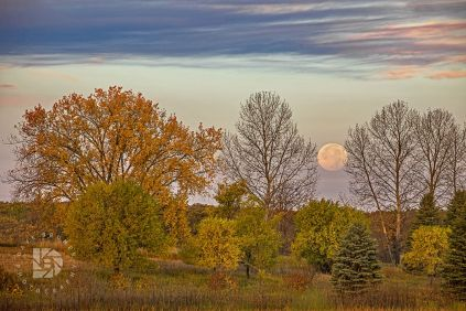 """The Harvest Moon and Fall Foliage"": Took this image Friday morning just as the moon was setting in the west and just before the sun rose from the east. Had beautiful fall colors and some clouds in the sky to complete this landscape."