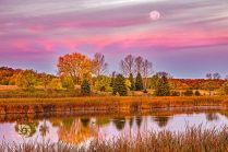 """""""Fall Morning Glory"""": The Harvest Moon was setting in the early morning light as I set up to photograph the fall colors and the two geese in the the water. The early sun lit up the clouds in it's pink glow, which made for a colorful fall scene."""