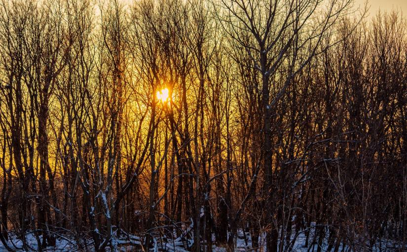 MICHAEL BOGERT: Photo Gallery — Winter Wanderings