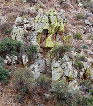 The lichens on the rock cliffs turned brighter with the rain. Those are oak trees, and they are not as small as they look.