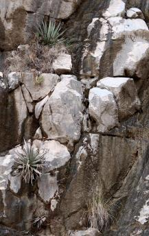 Runoff from the rains of the past days, the first measurable precip in 160 days, make the rocks more striking.