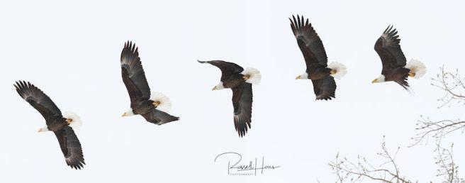 Eagle composit 3 20 2018