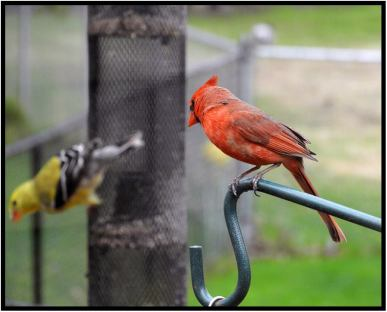 May 9: Photographed from a window yesterday in Bloomington, Minn.