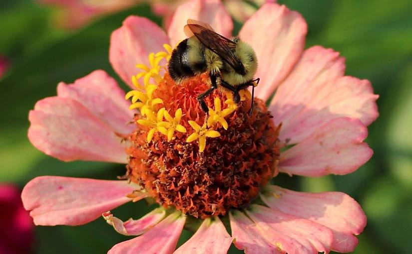 ERIC BERGESON: Photo Gallery — 'Pollinators'