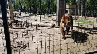 Dakota Zoo, Bismarck, N.D.