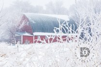 """Country Frost"": We had some nice frost Wednesday morning (Dec. 13), so I ventured out to take some images as we don't see it that often in the Grand Forks area. This old barn surrounded by the frosty trees and foliage became the main subject in this composition."