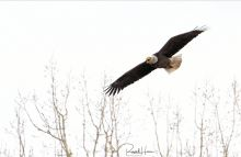 Wildlife around Grand Forks, ND and East Grand Forks, MN. All my 2020 wildlife photos here: https://russellhonsphotography.shootproof.com/2020_Wildlife