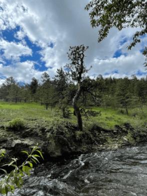 Falls River in Estes Park.