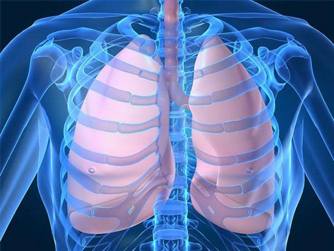 Az emberi tüdők.