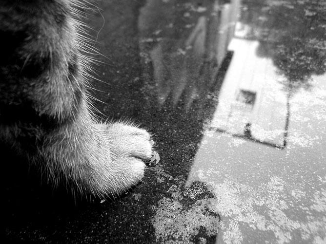 Egy macska lába a vizes járdán.