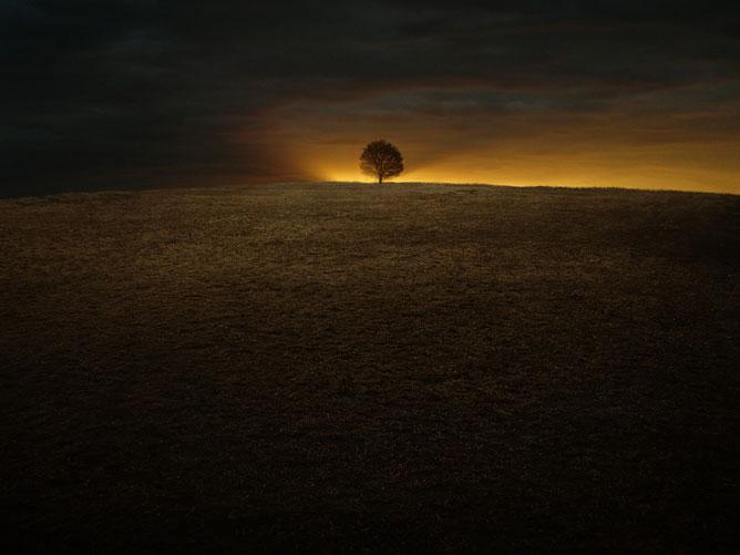 Magányos fa a dombtetőn.