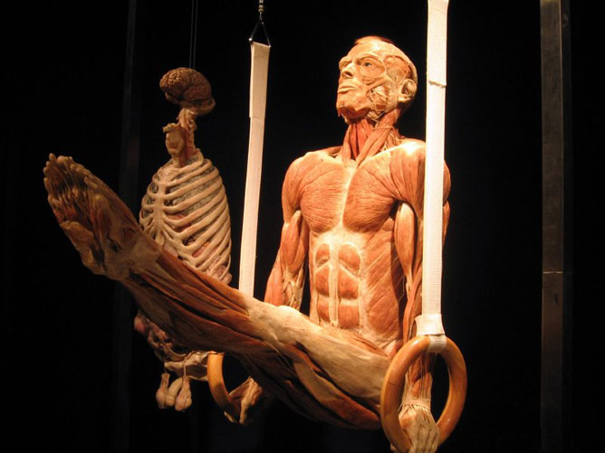 Az emberi test.