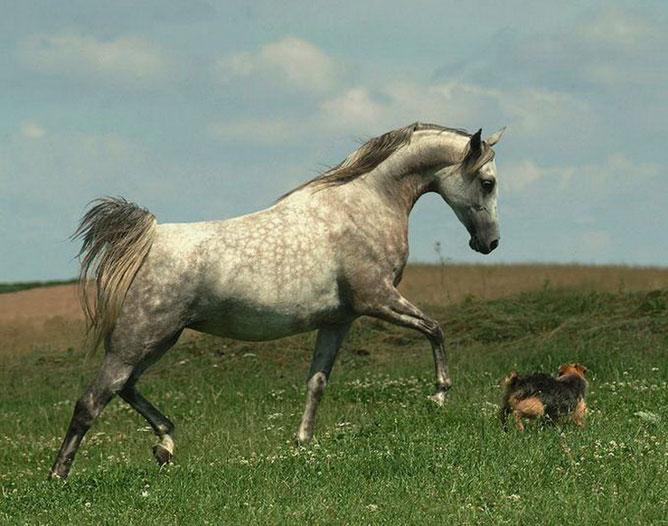Ló és kutya.